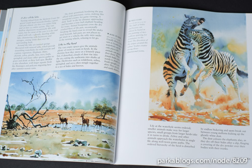 Hazel Soan's African Watercolours - 08