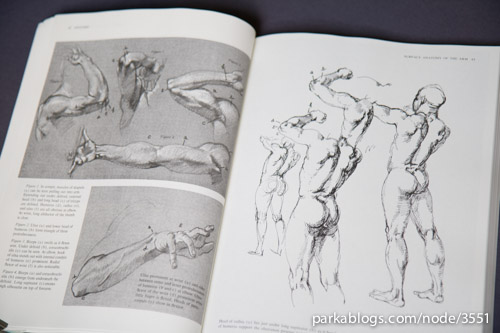 Anatomy: A Complete Guide for Artists - 06
