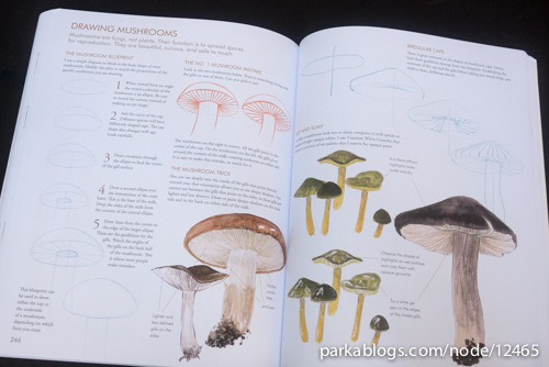 Laws Guide to Nature Drawing and Journaling - 11