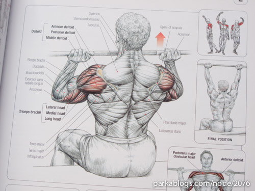 Strength Training Anatomy - 04